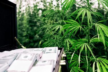 The Safest Marijuana Stock to Buy Today