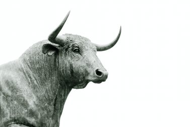 Is it a Bear or Bull Market Right Now?