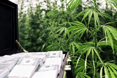 The Best Cannabis Stock to Buy Today